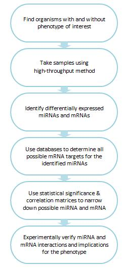 Steps for determining which mRNAs are targets of miRNAs.